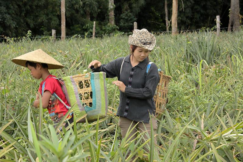 Kinderarbeit auf einer AnanasplantageKinderarbeit auf einer Ananasplantage |  Bild: © ILO/Adri Berger [CC BY-NC-ND 2.0]  - flickrKinderarbeit auf einer Ananasplantage