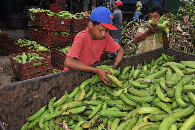 A young boy works in a plantain and banana processing plant in Nicaragua |  Bild: ©  Bread for the World [CC BY-NC-ND 2.0]  - flickrA young boy works in a plantain and banana processing plant in Nicaragua