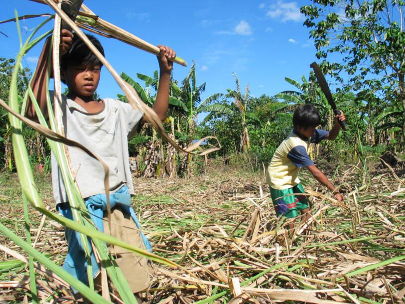 Kinderplantagenarbeiter in Bacolod, Philippinen |  Bild: Children in field cut crops © ILO/Joseph Fortin [CC BY-NC-ND 3.0]  - ILO Asia-Pacific / flickr
