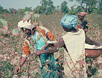Subventionen auf Kosten von Entwicklungsländern