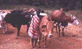 Kenia |  Bild: © n.v.Kenia