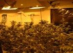 Drogen, Krieg, Cannabis, Plantage, Anbau
