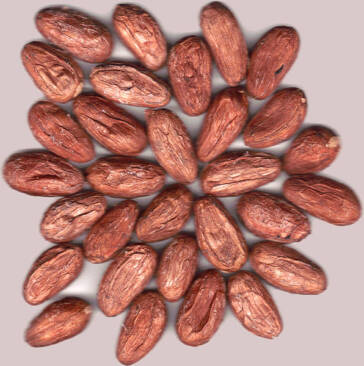 Hershey investiert in ökologischen Kakao