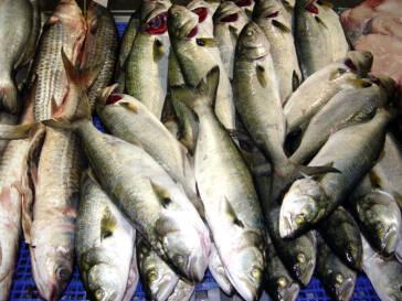 Kinderarbeit in Fischereibetrieben: Neuer Leitlinienentwurf