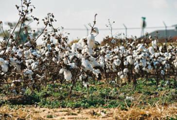 ILO gibt vorläufiges Ergebnis über Kinderarbeit auf usbekischen Baumwollfeldern bekannt