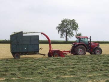 USA: Keine Schutzregeln für Kinder in der Landwirtschaft