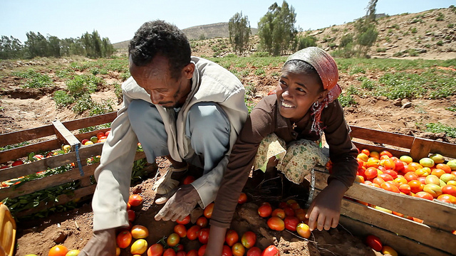 Sorting tomatoes |  Bild: ©  PRO World Bank Photo Collection [CC BY-NC-ND 2.0]  - flickrSorting tomatoes
