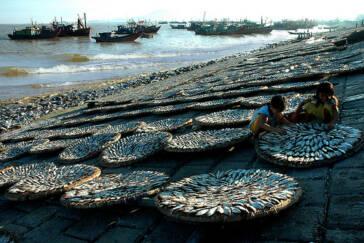 Thailand: Kinderarbeit in der Fischindustrie