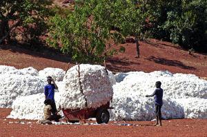 Ugandas Kleinbauern profitieren von nachhaltiger Baumwollproduktion