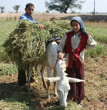 Sozialhilfe in der Landwirtschaft: Ja, aber genug?
