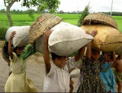 Baumwollträger in Indien