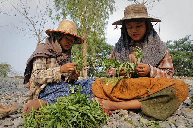 Vor allem in den ländlichen Regionen ist es in Myanmar selbstverständlich, dass Kinder arbeiten |  Bild: Myanmar : A new path out of adversity © Marcel Crozet / ILO [CC BY-NC-ND 2.0]  - flickr