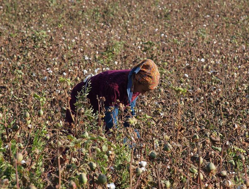 Baumwollfelder UsbekistanZwangsarbeit ist auf usbekischen Baumwollfeldern immer noch Alltag. |  Bild: © Chris Shervey [CC BY 2.0]  - FlickrBaumwollfelder Usbekistan
