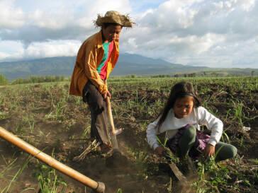 Chia-Samen, Goji Beeren und Quinoa: Wie augenscheinlich gesunde Nahrungsmittel die Gesundheit der Kinder Lateinamerikas ruinieren