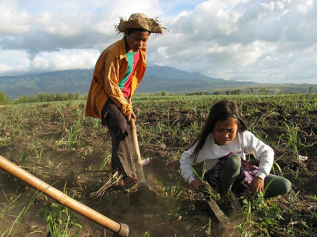 Kinder Lateinamerikas und Chinas arbeiten für weltweit begehrte Superfoods: Goji Beeren, Chia-Samen und Quinoa  |  Bild: ILO Asia-Pacific Children plantation workers in Bacolod, Philippines © ILO/Joseph Fortin [CC BY-NC-ND 2.0]  - flickr