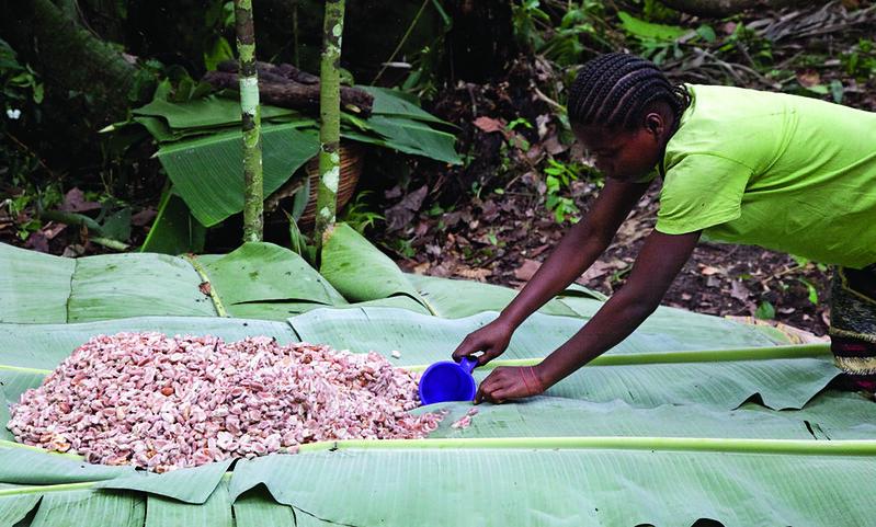 Ein Mädchen breitet Kakaobohnen auf einem großen Palmblatt aus.Ein Mädchen bei der Kakaoernte    Bild: Drying cocoa © Laura Elizabeth Pohl [CC BY-NC-ND 2.0]  - FlickrEin Mädchen breitet Kakaobohnen auf einem großen Palmblatt aus.