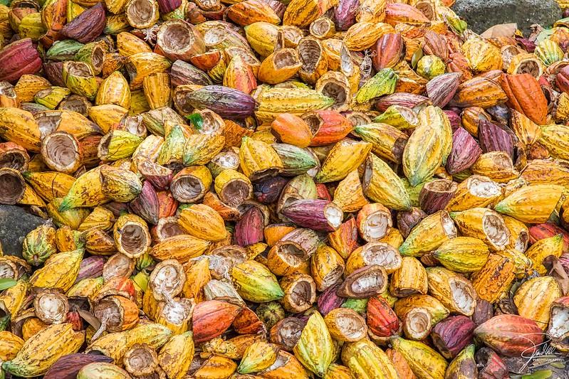KakaoschotenDie Kinderarbeit im Kakaoanbau nimmt zu |  Bild: ©  Frank Kehren [(CC BY-NC-ND 2.0) ]  - flickrKakaoschoten