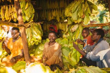 Kinderarbeit auf Tabakplantagen: Eine moderne Form der Sklaverei